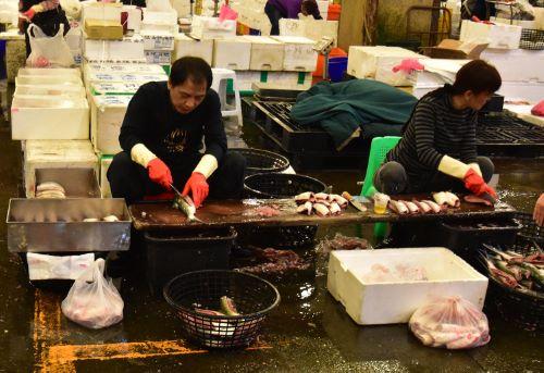 台湾高雄前鎮漁港サバヒー