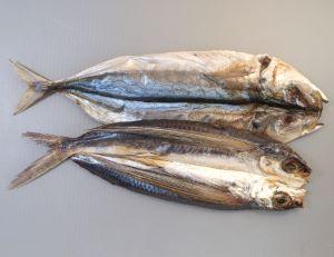 伊豆諸島・伊豆半島のトビウオの食文化